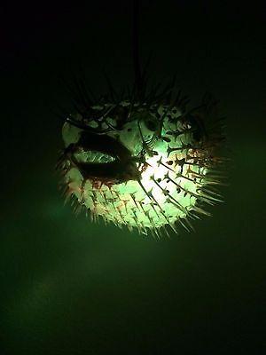 "NEW 8""-9"" Puffer Fish Lamp w/color changing LED Light Tiki bar Smokin Tikis fx 7"