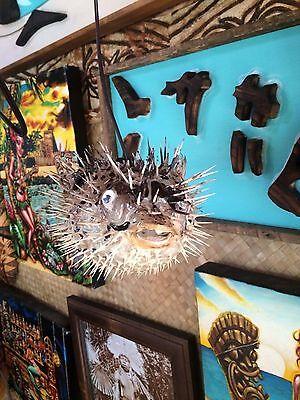 "NEW 8""-9"" Puffer Fish Lamp w/color changing LED Light Tiki bar Smokin Tikis fx 12"