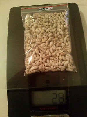 28gr/1(oz.) WHITE-BUTTON mushroom-spores-mycelium-on-dried-seeds FREE SHIPPING!! 5
