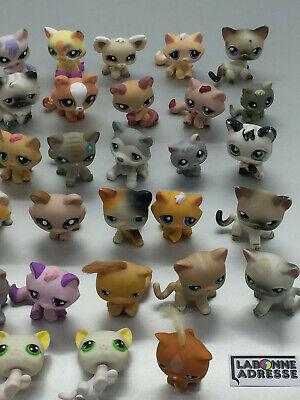 Lps Littelest Pet Shop Chat Cat 40 Ex. Au Choix Choose Petshop Little Pet Shop 5