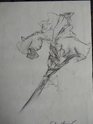 Original Pencil realist expressive line flower drawing of a single iris on paper 2
