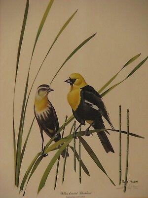 Vintage Ray Harm Yellow-Headed Blackbird Signed Framed Print, Plate XLIII 2