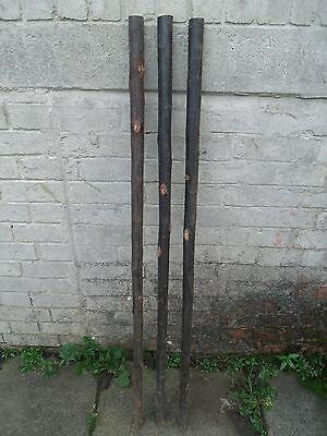 3 Chestnut Shanks Stickmaking Walking Stick Shafts Blanks Bark Seasoned Blank 5