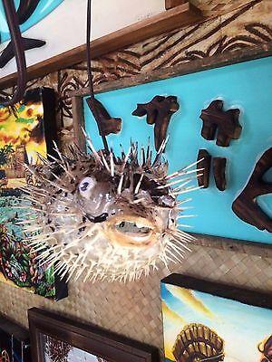 "NEW 7""- 8"" Puffer Fish Lamp w/color changing LED Light Tiki bar Smokin Tikis 21 9"