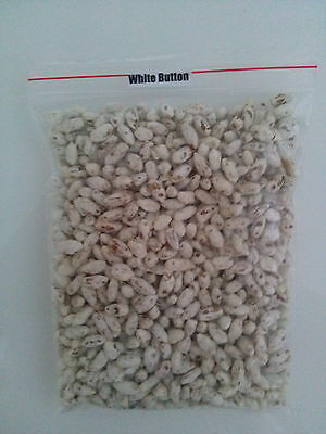 28gr/1(oz.) WHITE-BUTTON mushroom-spores-mycelium-on-dried-seeds FREE SHIPPING!! 2