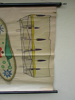 alte Rollkarte Schulwandkarte Wandkarte Urtiere (27) 4