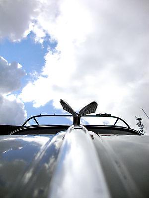 Phoenix Flügel Talisman Logo für VW Käfer Skarabäus Typ 1 Oval Vintage Aac014