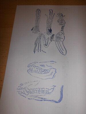 2 Stempel /Biologie/ Tiere/ Gebisse und Gliedmaßen, gebraucht (2) 4