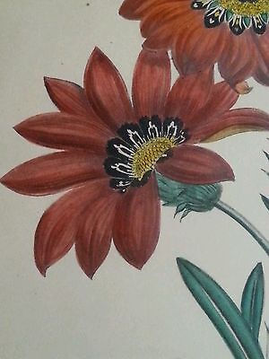 Antique botanical lithograph by Day & Haghe London, 1840's Gazania pavonia 8