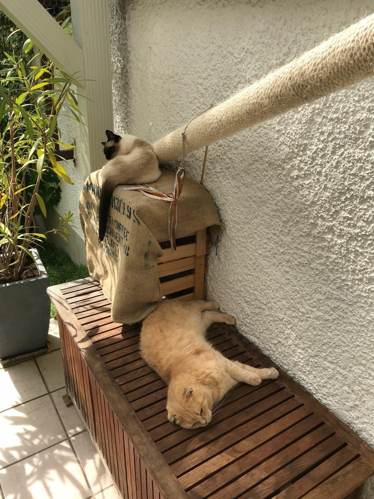 Sisalseil Sisal Kratzbaumseil Kratzbaum 6,8,10 mm Seil Kratzbäume Katzen Schnur 6