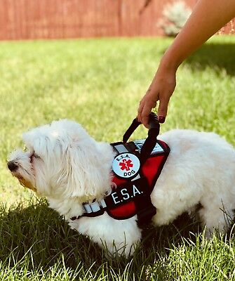ALL ACCESS CANINE™ Service Dog - ESA Dog - Therapy Dog - Vest Waterproof Harness 5