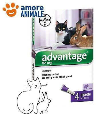 Bayer Advantage 80 mg per GATTO oltre 4 kg - 4 pipette - Anche per CONIGLI 4