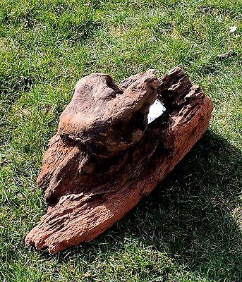 Mangroven Wurzel Sehr groß 46cm x 30cm x 26cm #10 (Aquarium Fische Dekoration) 3