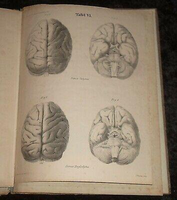 Das Hirn des Negers ,Original von 1837 , Friedrich Tiedemann 11