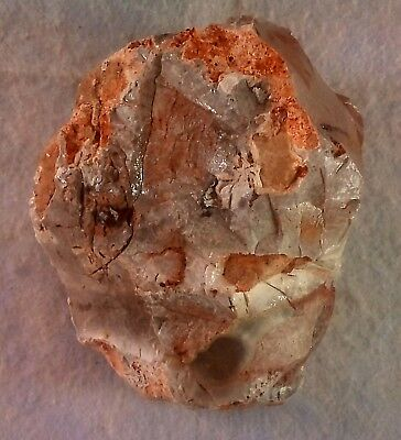 Aex-Head Aex.Paleolithic period.Museum Level. Jordan Rift Valley 914 GR' - 32OZ