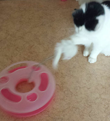 UK Cat Play Happy Circle Crazy Mouse Motion Kitten Toy Ball Track + FREE Catnip 8