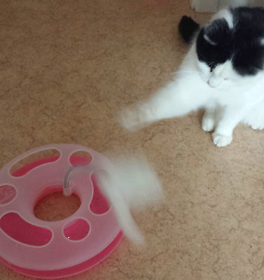 UK Cat Play Happy Circle Crazy Mouse Motion Kitten Toy Ball Track + FREE Catnip 7