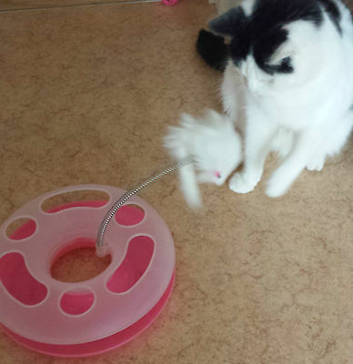 UK Cat Play Happy Circle Crazy Mouse Motion Kitten Toy Ball Track + FREE Catnip 9