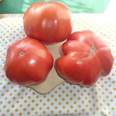Samen Tomaten Intakt 290400 Quedlinburger AR5466 Saatgut