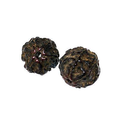 (1505)  Antique rudraksha beads 6 mukhi facets 7