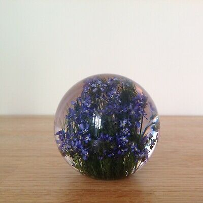 FORGET ME NOT PAPERWEIGHT With Real Forget Me Not - Collectable Country Gift Art 3