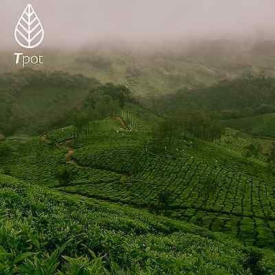 ORGANIC Japanese Matcha Green Tea Powder - Latte - Up to 200 Serves 7