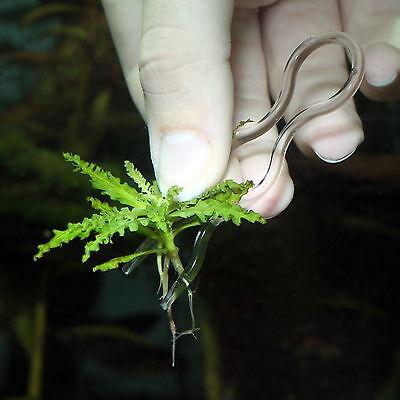 JBL ProScape Plantis  12 Pflanzennadeln zur sicheren Fixierung von Pflanzen
