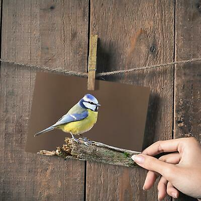 "Beautiful Blue Tit Bird Wild Small Photograph 6/""x4/"" Art Print Photo Gift #15773"