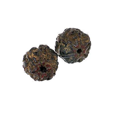 (1505)  Antique rudraksha beads 6 mukhi facets 4