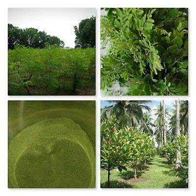 Moringa Oleifera Leaf Powder 1 lb ( 16oz ) - Organic, Natural 100% Pure , YOKABA 5