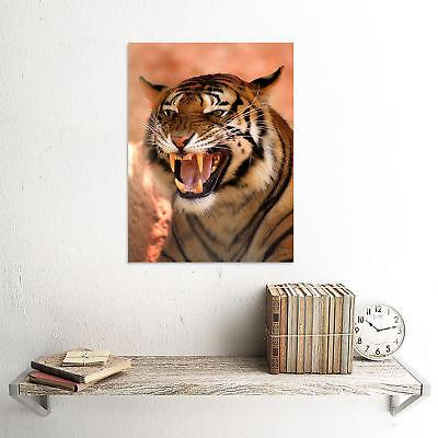 3370 Animal Poster EVENING GROSBEAK Picture Poster Print Art A0 A1 A2 A3 A4