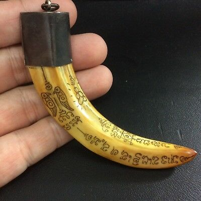 TIGER Carved Real Wild BOAR Pig Tooth Bless Thai Amulet Power Fang Pendant Magic