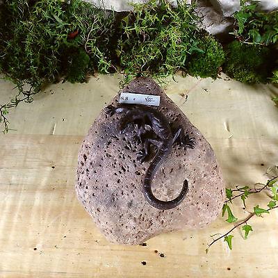 Garten Terrasse Bachlauf Naturstein Sandstein Krauterspirale Echse