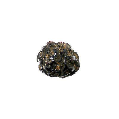 (1505)  Antique rudraksha beads 6 mukhi facets 2