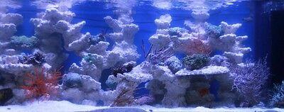 Riffkeramik Anemone Schale Topf Meerwasser Aquarium Deko Steine In Top Qualitat Eur 14 90 Picclick De