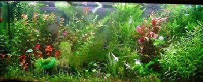 Lot Plantes Complet Pour  Aquarium Special Discus 600L 2