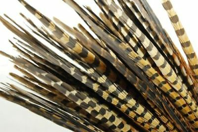 "English Ringneck PHEASANT Tail Natural Feathers 10-100 Pcs MANY SIZES 6-26"" New! 3"