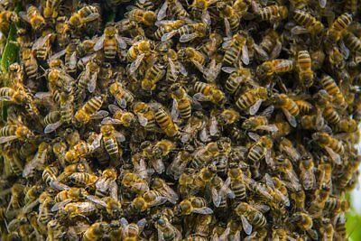 Blumen-Bienen-Blühende Wiese bunte Mischung Samen für ca 6-8 qm 1Portion