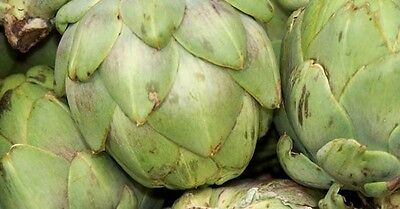 Vegetable Artichoke Gros Vert De Laon - 100 Seeds 2