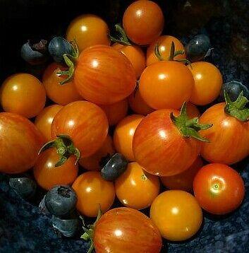 ☺100 graines de tomates cerises (5 variétés  mélangées ) 6