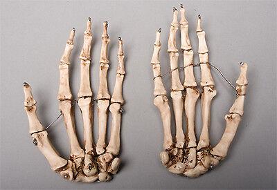 Halloween horror aged skeleton hands life size human skeleton left halloween horror aged skeleton hands life size human skeleton left right ccuart Images