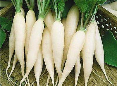 early Radish seeds Agata Vegetable from Ukraine