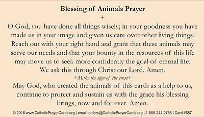 ST  FRANCIS BLESSING of Animals Prayer Card (wallet size)