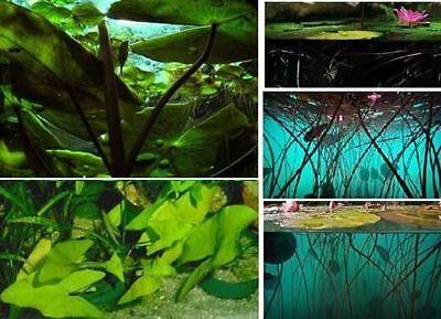 Blaue Seerose Aquarium Zubehör Aquariumdeko Dekoideen für Aquarien das Terrarium 2
