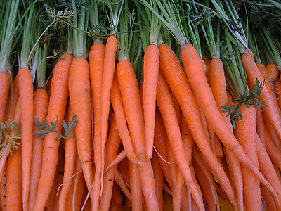 Carrot Tendersweet  Sweetest Carrot! A.A.S. Winner! 600+SEEDS COMBINED SHIPPING 2