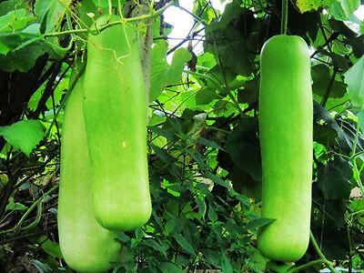 Lục Bát Hoa ĐV - Page 7 6-Green-Bottle-Gourd-Seeds-Lagenaria-Siceraria-Organic-_1
