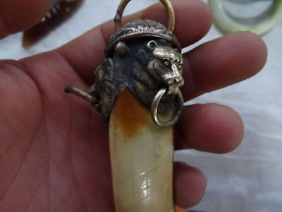 Wild Lion package Wild Boars Tooth Hog talismanic Pendant To ward off bad luck 5