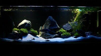 25 Kg Natural Silica Sand Gravel Pure White Aquarium Fish Tank + Free Pebbles 5