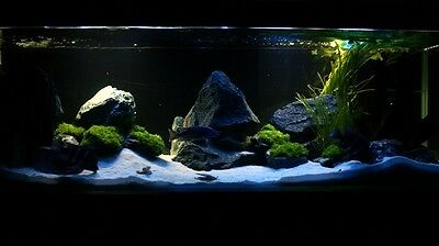 25 Kg Natural White Aquarium Silica Sand Free Coral Tree Decoration 5