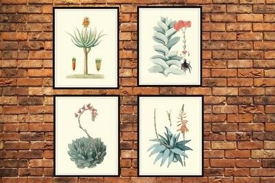 """Set of 4 Vintage Botanical Art Print Poster Reproductions """"Cactus and Succulents 2"""